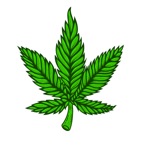 Illustration of cannabis leaf on white background.