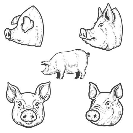 Serie di illustrazioni di maiale. Testa di maiale. Elemento di design per emblema, segno, poster, distintivo. Illustrazione vettoriale Vettoriali