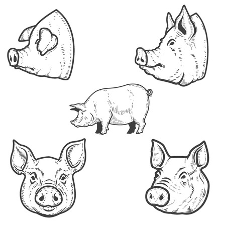 Set of pig illustrations. Pork head. Design element for emblem, sign, poster, badge. Vector illustration