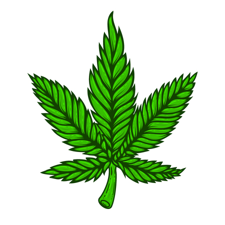 Illustration of cannabis leaf on white background. Design element for poster, card, banner, t shirt.