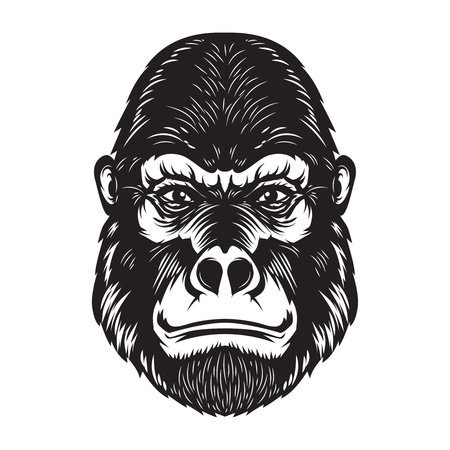 Gorilla ape head illustration on white background. Design elements for poster, emblem, sign. Stock Photo