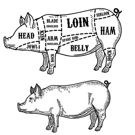 Pig Butcher Diagram Pork Cuts Design Element For Poster Card