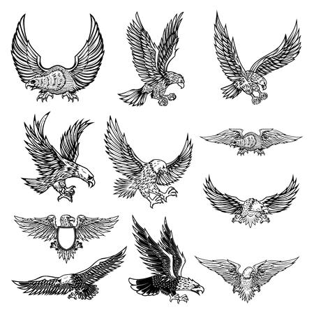 Illustrazione dell'aquila volante isolata su priorità bassa bianca. Illustrazione vettoriale.