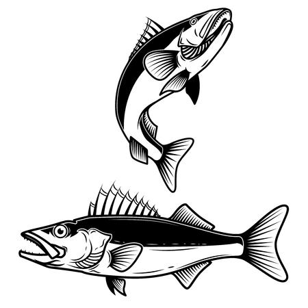 Signe de poisson doré sur fond blanc. Pêche au sandre. Élément de design pour logo, étiquette, emblème, signe. Illustration vectorielle
