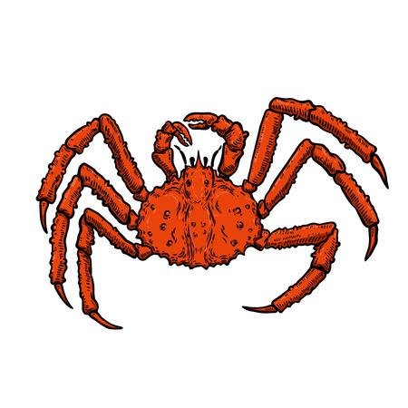 Illustration der Königskrabbe lokalisiert auf weißem Hintergrund. Gestaltungselement für Logo, Etikett, Emblem, Zeichen, Plakat, Menü, T-Shirt. Vektorbild