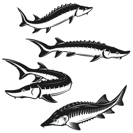 Set of sturgeon fish illustrations on white background. Design element for logo, label, emblem, sign. Vector illustration Stock Illustratie