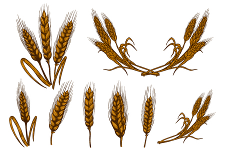 Set of wheat spikelet illustrations isolated on white background. Design element for poster, card, emblem, sign, card, banner. Vector image Illustration