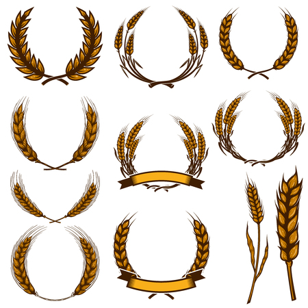 Set of wheat spikelet illustrations isolated on white background. Design element for poster, card, emblem, sign, card, banner. Vector image Ilustração