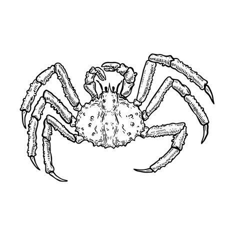 Illustration of King Crab isolated on white background. Design element for logo, label, emblem, sign, poster, menu, t shirt. Vector image Illustration