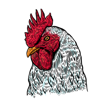 Hand drawn rooster illustration. Design element for poster, card, label, sign, card, banner. Vector image Ilustração