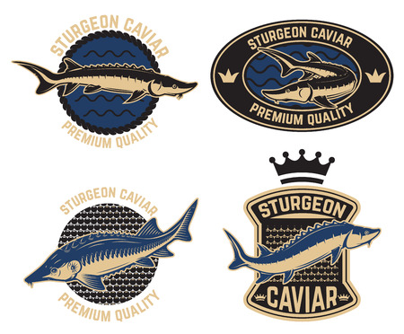 Sturgeon caviar label template. Design element for logo, label, emblem, sign, poster. Vector illustration Vettoriali