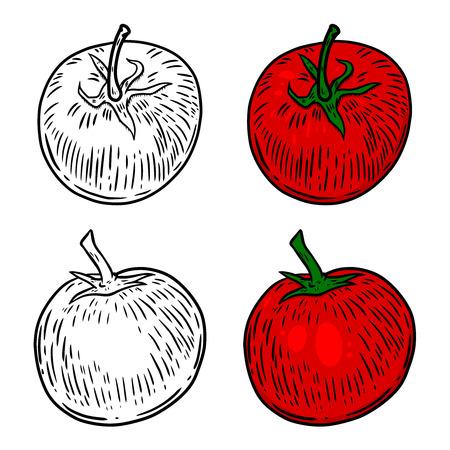 Tomato hand drawn illustrations. Design element for poster, card, banner, flyer. Vector image Illustration