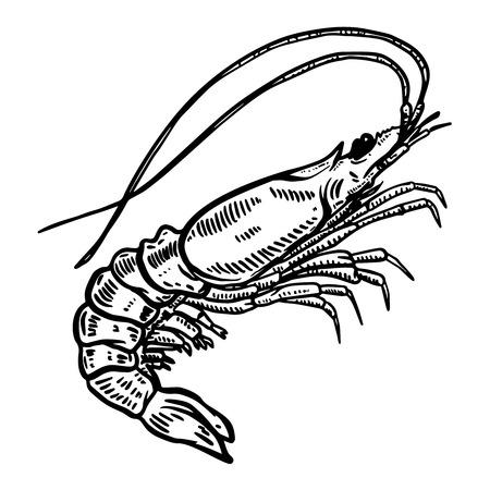 Ilustración de camarones sobre fondo blanco. Elemento de diseño de logotipo, etiqueta, emblema, letrero, cartel, camiseta.