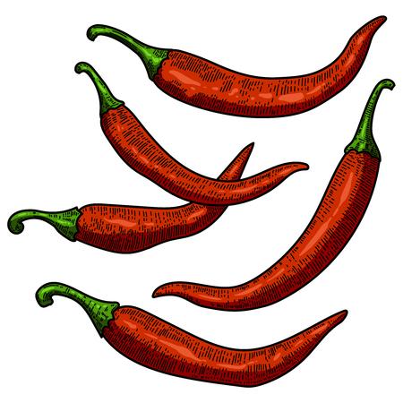 Set of chili pepper illustrations on white background. Design element for poster, card, banner, menu. Vector illustration Иллюстрация