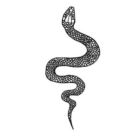 Hand drawn snake illustration in doodle style. Design element for poster, card, t shirt. Vector illustration Ilustração