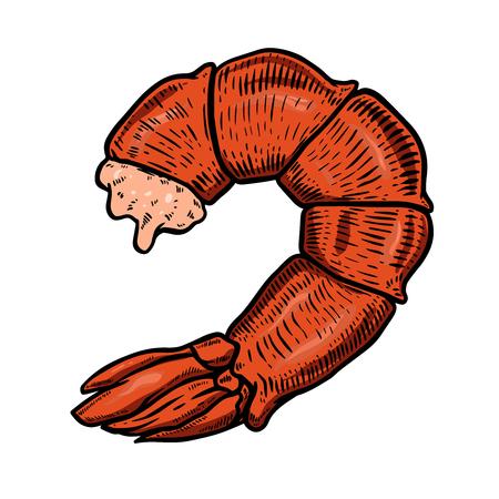 Shrimp tail meat illustration. Design element for poster, banner, card, menu. Vector illustration