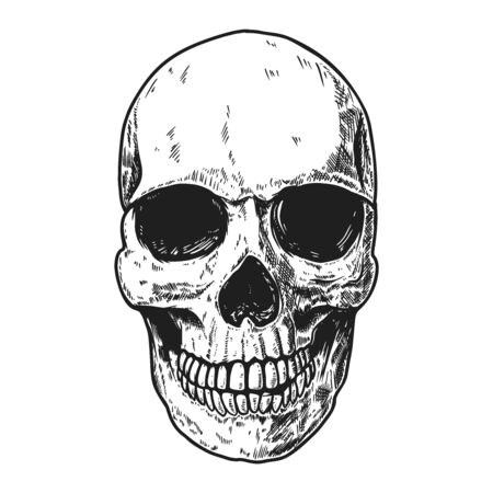 Hand drawn human skull on light background.