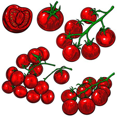 Hand drawn illustration of tomatoes. Design element for poster, t shirt, card, banner. Vector illustration