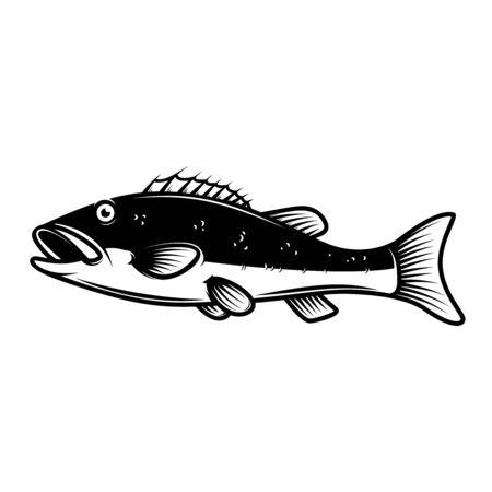 illustration of Perch fish.