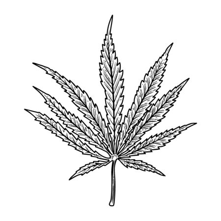 Illustration of cannabis leaf isolated on white background. Design element for poster, banner, t shirt, emblem. Vector illustration Stock Vector - 129261093