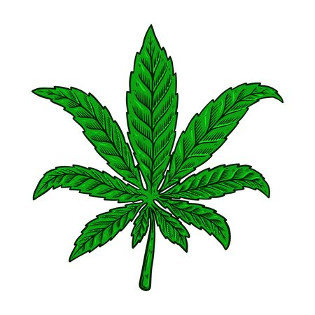 Illustration of cannabis leaf isolated on white background. Design element for poster, banner, t shirt, emblem. Vector illustration Vecteurs