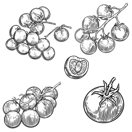 Set of illustrations of tomatoes isolated on white background. Design element for poster, card, banner, sign, menu. Vector illustration Illustration