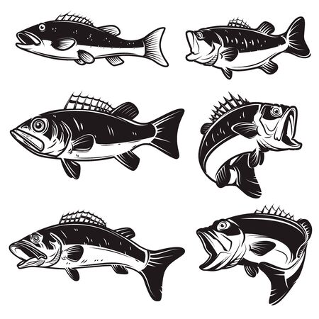 Set of Illustrations of the bass, perch fish isolated on white background.