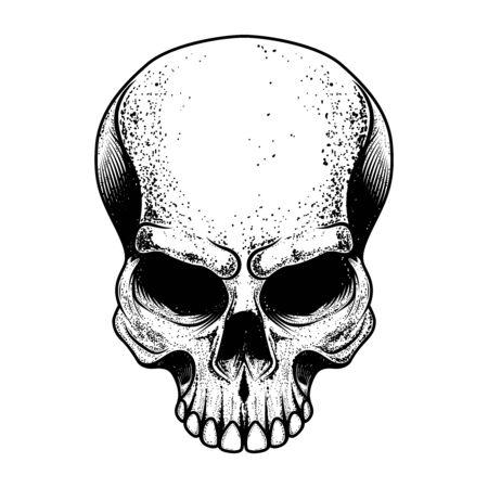 Skull illustration isolated on white background.