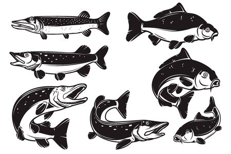 Set of Illustrations of the carp, pike fish isolated on white background. Design element for label, badge, sign. Vector illustration