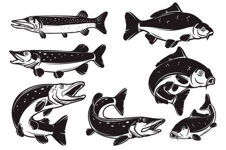 Set of Illustrations of the carp, pike fish isolated on white background. Design element for label, badge, sign. Vector illustration Ilustracje wektorowe