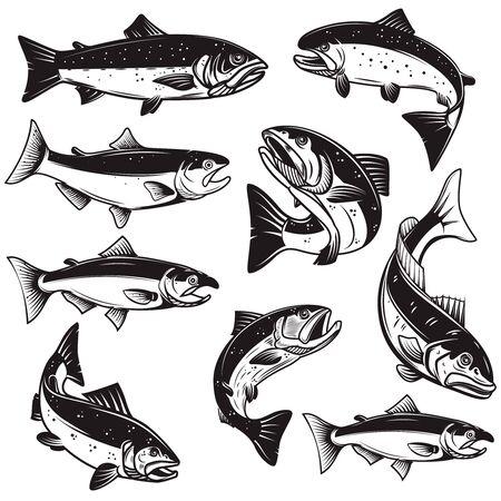 Set of Illustrations of salmon fish in engraving style. Design element for label, sign, emblem, poster. Vector illustration Ilustração Vetorial
