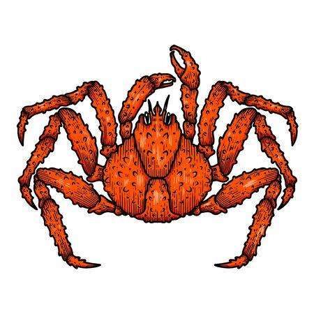 Illustration of japanese spider crab. Design element for logo, label, sign, emblem, poster. Vector illustration