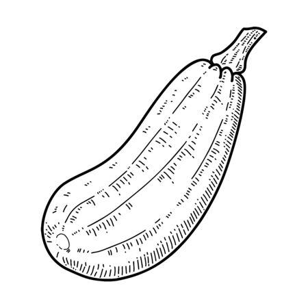 Illustrations of vegetable marrow in engraving style. Design element for emblem, sign, poster, card, banner, flyer. Vector illustration Ilustracja
