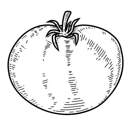 Illustration of tomato in engraving style. Design element for label, sign, poster, t shirt. Vector illustration