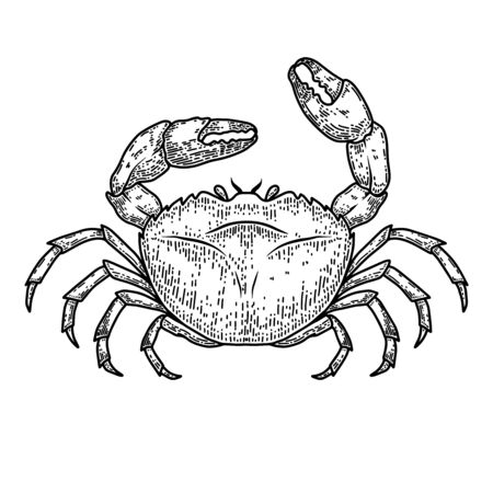 Illustration of sea crab in engraving style.