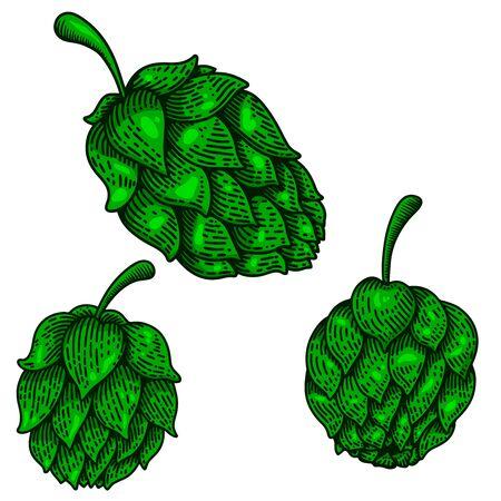Set of Illustration of beer hops in engraving style. Design element for  label, sign, poster, t shirt. Vector illustration Illustration