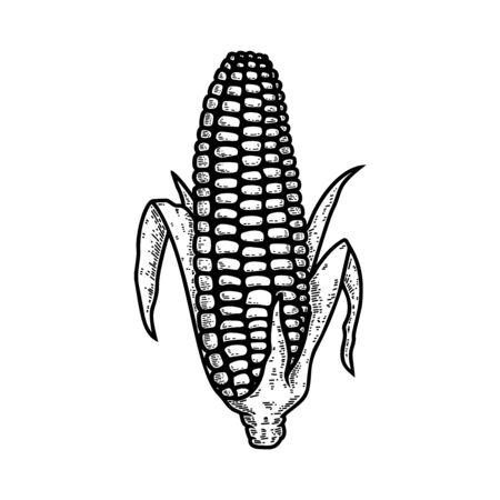 Illustration of ear of corn in engraving style. Design element for  label, sign, emblem, poster. Vector illustration