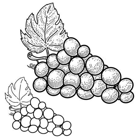 Illustration of wine grape in engraving style. Design element for  label, sign, emblem, poster. Vector illustration