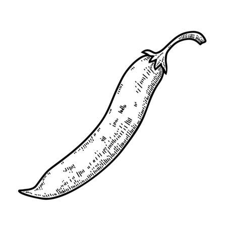 Illustration of chilli pepper in engraving style. Design element for label, sign, emblem, poster. Vector illustration Illustration