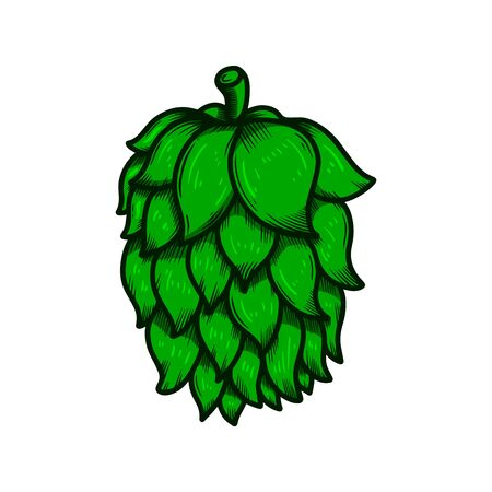 illustration of beer hop in engraving style. Design element for poster, label, sign, emblem, menu. Vector illustration