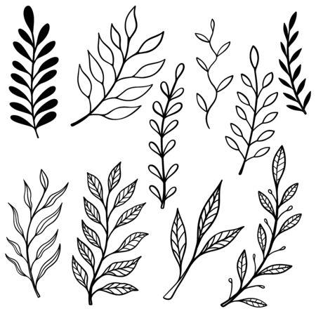 Set of Illustrations of vintage hand drawn floral design elements.