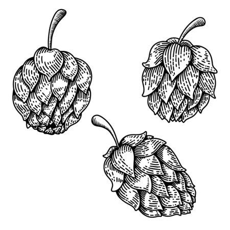 Set of illustrations of beer hop in engraving style. Design element for poster, label, sign, emblem, menu. Vector illustration