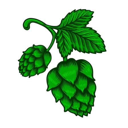 illustration of branch of beer hop in engraving style. Design element for poster, label, sign, emblem, menu. Vector illustration