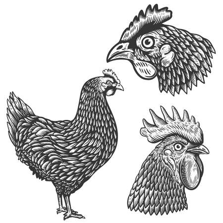Set of illustrations of chickens in engraving style. Rooster head.