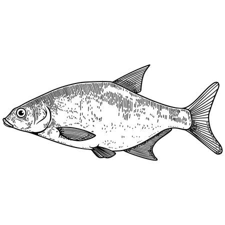 Illustration of bream fish in engraving style. Design element for logo, label, sign, poster, t shirt. Vector illustration Çizim