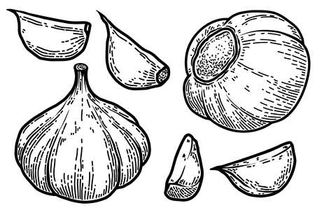 Set of Illustrations of garlic in engraving style. Design element for logo, label, emblem, sign, badge. Vector illustration