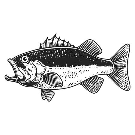 Illustration of bass fish in engraving style. Design element for logo, label, sign, poster, t shirt. Vector illustration