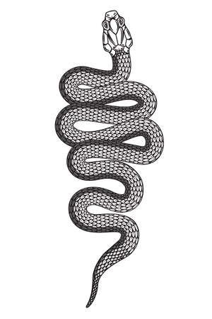 Illustration of poisonous snake in engraving style. Design element for  label, emblem, sign, badge. Vector illustration