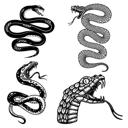 Set of illustrations of poisonous snake in engraving style. 矢量图像