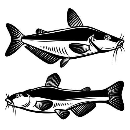 Set of illustration of catfish in engraving style. Design element for label, sign, poster, t shirt. Vector illustration